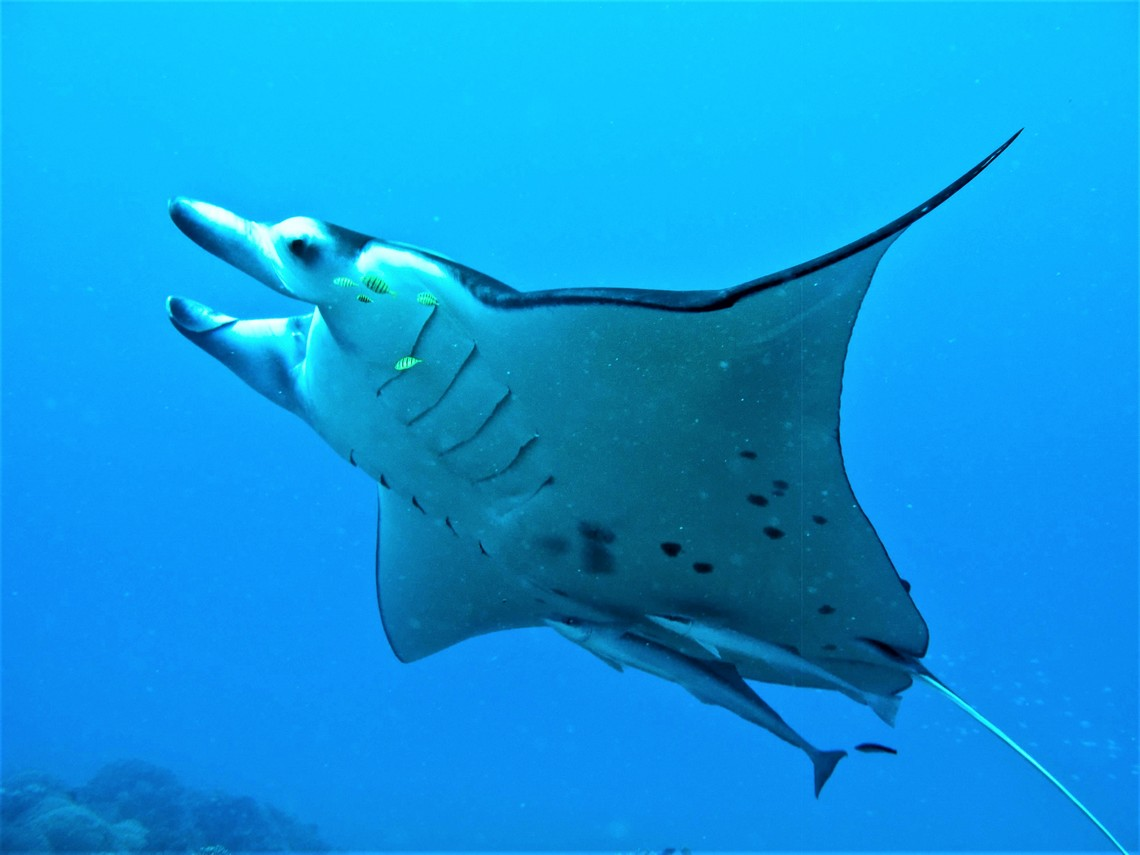 https://tahititourisme.com.au/wp-content/uploads/2017/08/Bora-Bora-Reef-Discovery-3.jpg