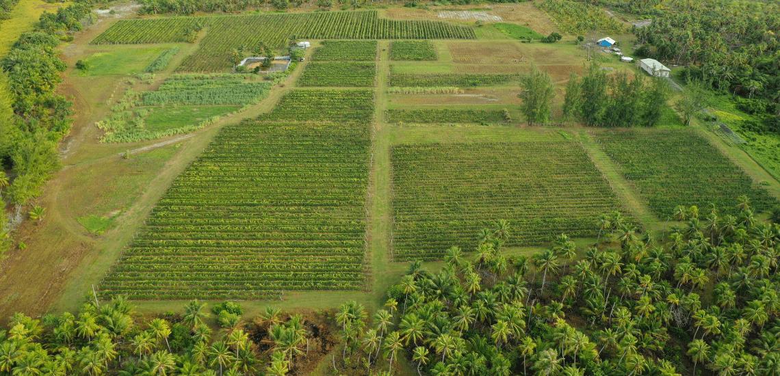 https://tahititourisme.com.au/wp-content/uploads/2017/08/Vin-de-Tahiti_1140x550-min.png