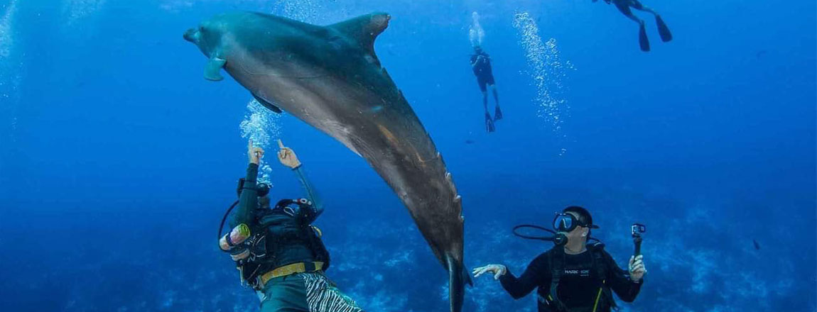 https://tahititourisme.com.au/wp-content/uploads/2017/10/Rangiroa-Diving-Center-1150x440px.jpg