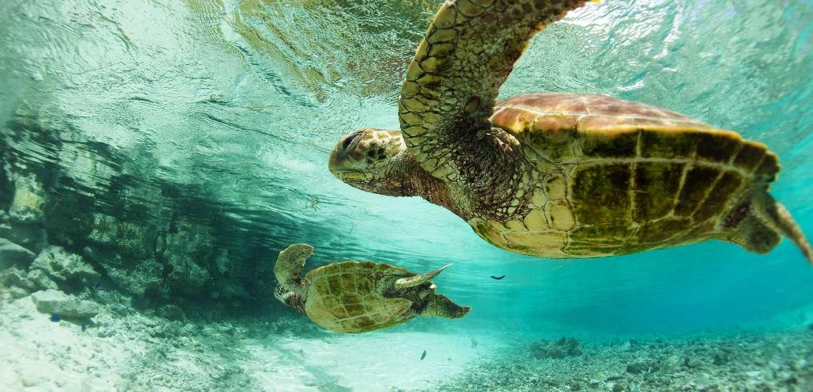 https://tahititourisme.com.au/wp-content/uploads/2017/12/Turtle-center_600.jpg