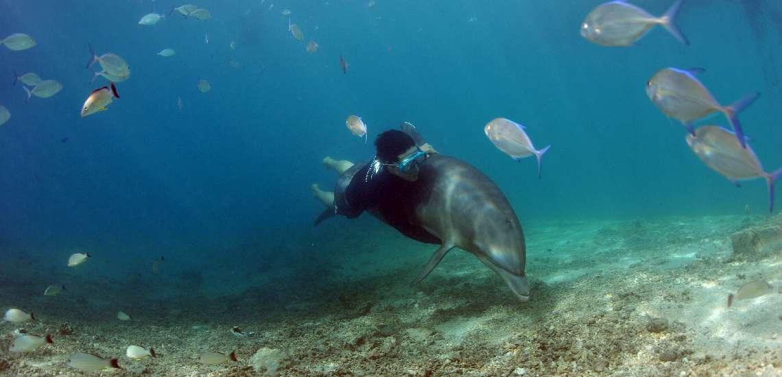 https://tahititourisme.com.au/wp-content/uploads/2018/01/moorea-dolphin-center_15095170079_o_600.jpg