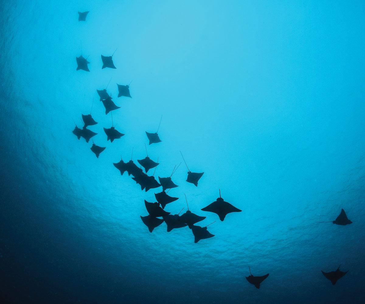 https://tahititourisme.com.au/wp-content/uploads/2018/03/sejour-plongee-les-plus-beaux-spots-de-plongee-polynesie-e-tahiti-travel-1.jpg