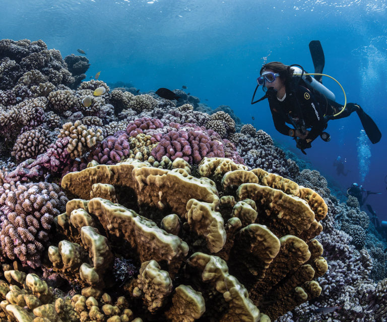 The Ultimate Dives – Society & Tuamotus Islands