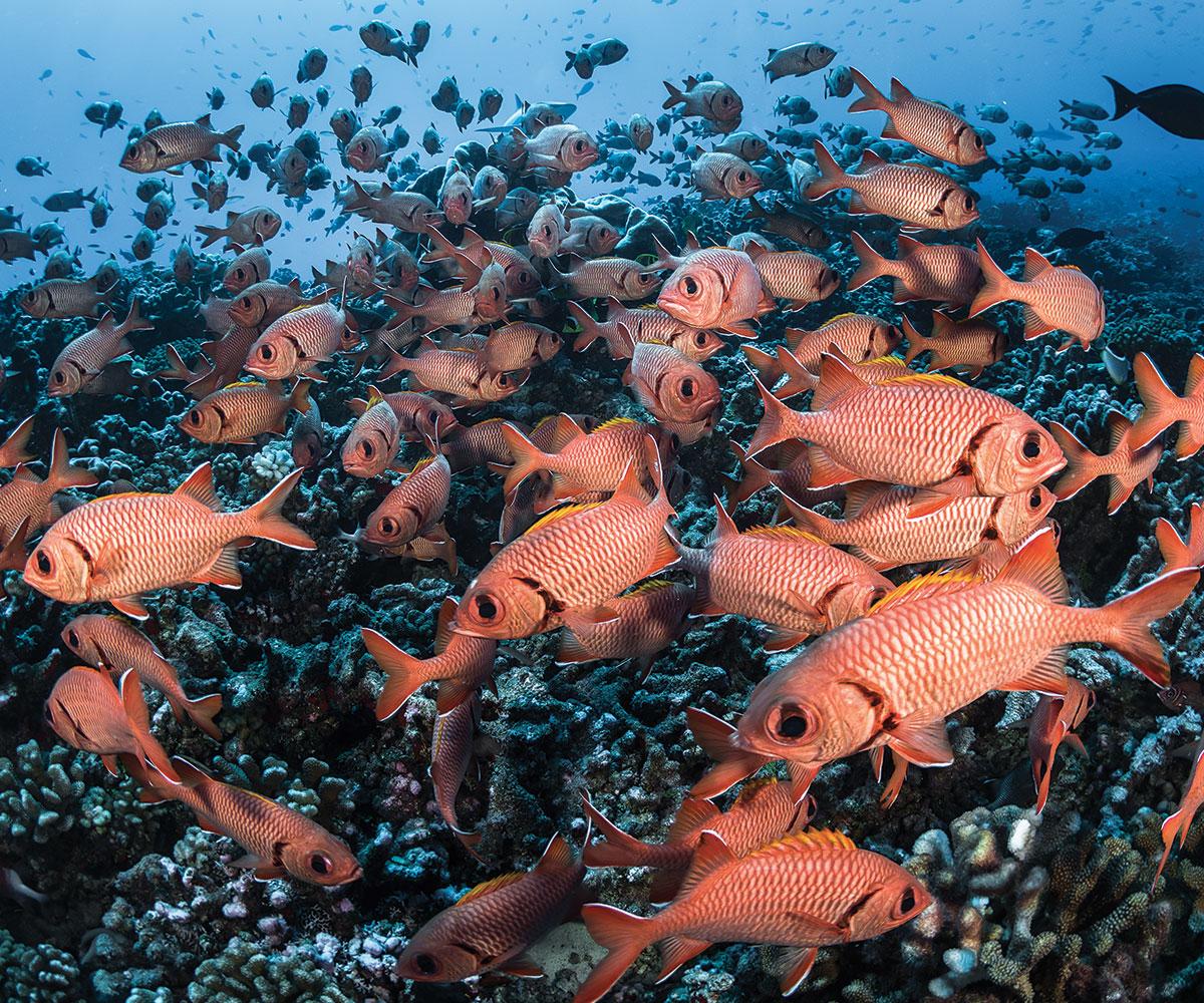 https://tahititourisme.com.au/wp-content/uploads/2018/03/sejours-plongees-aquatiki-fakarava-poissons-e-tahiti-travel-2.jpg