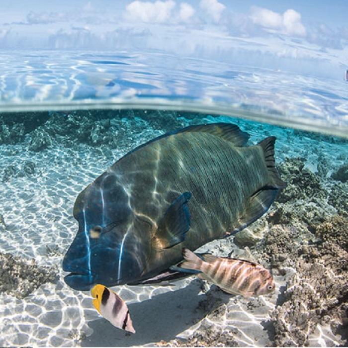 Revel in an Overwater combined Diving venture – Bora Bora
