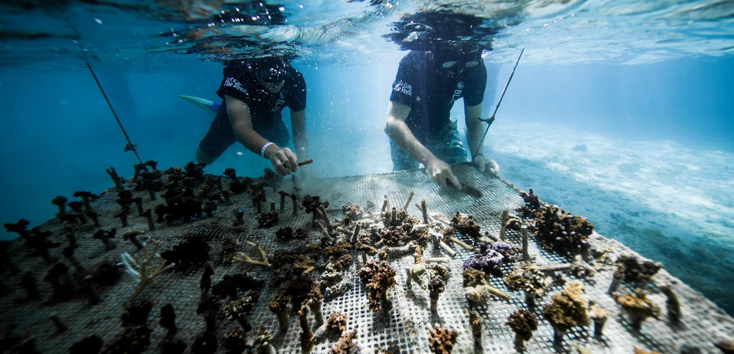 https://tahititourisme.com.au/wp-content/uploads/2018/11/CoralGardeners-couv.jpg