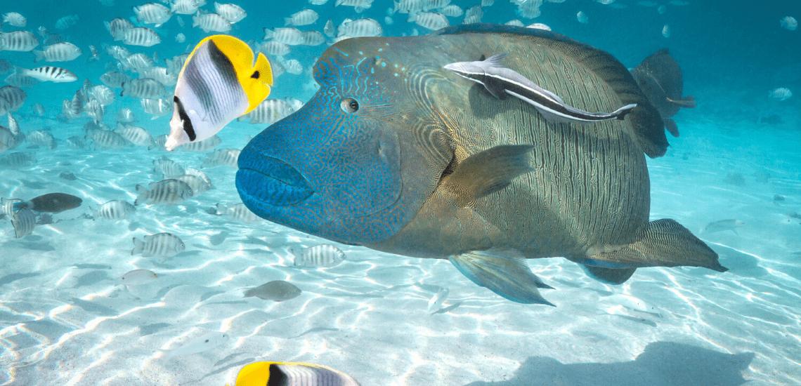 https://tahititourisme.com.au/wp-content/uploads/2020/02/SnorkelingExpeditions2_1140x550-min.png