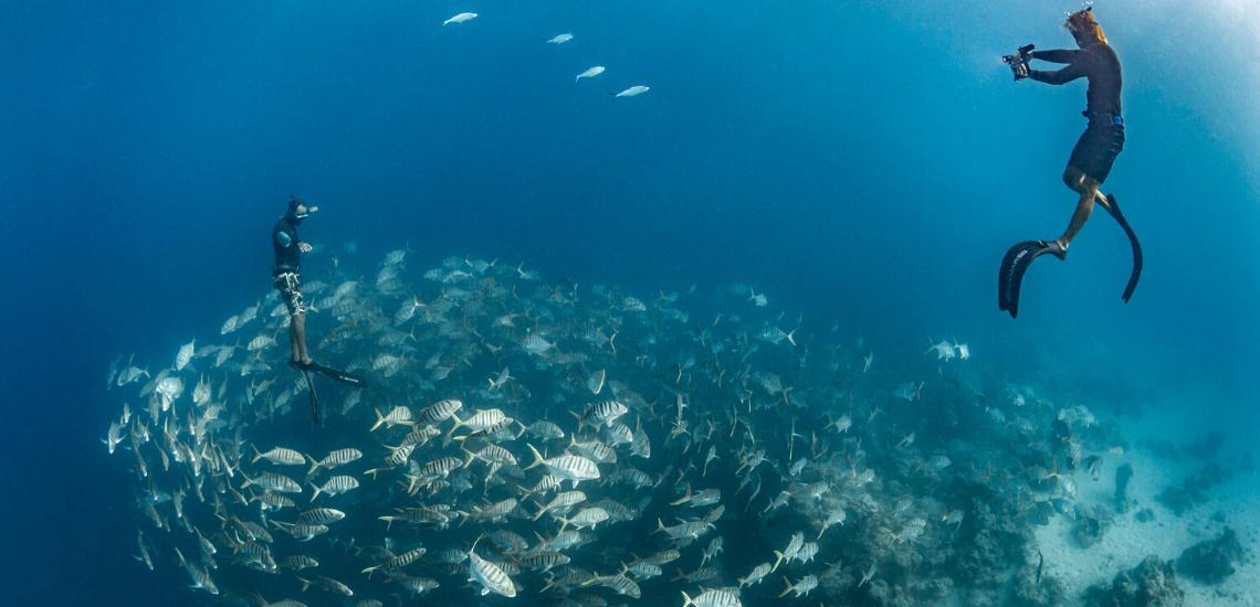 https://tahititourisme.com.au/wp-content/uploads/2020/02/SnorkelingExpeditions_1140x550.png
