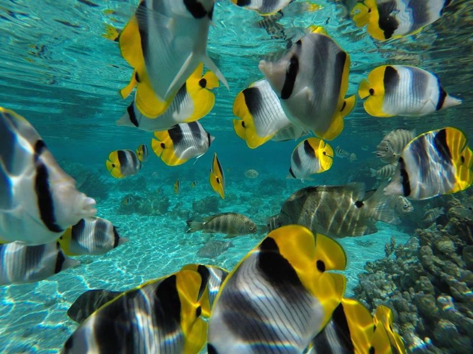 https://tahititourisme.com.au/wp-content/uploads/2020/06/jardin-corail-tahaa-5.jpg