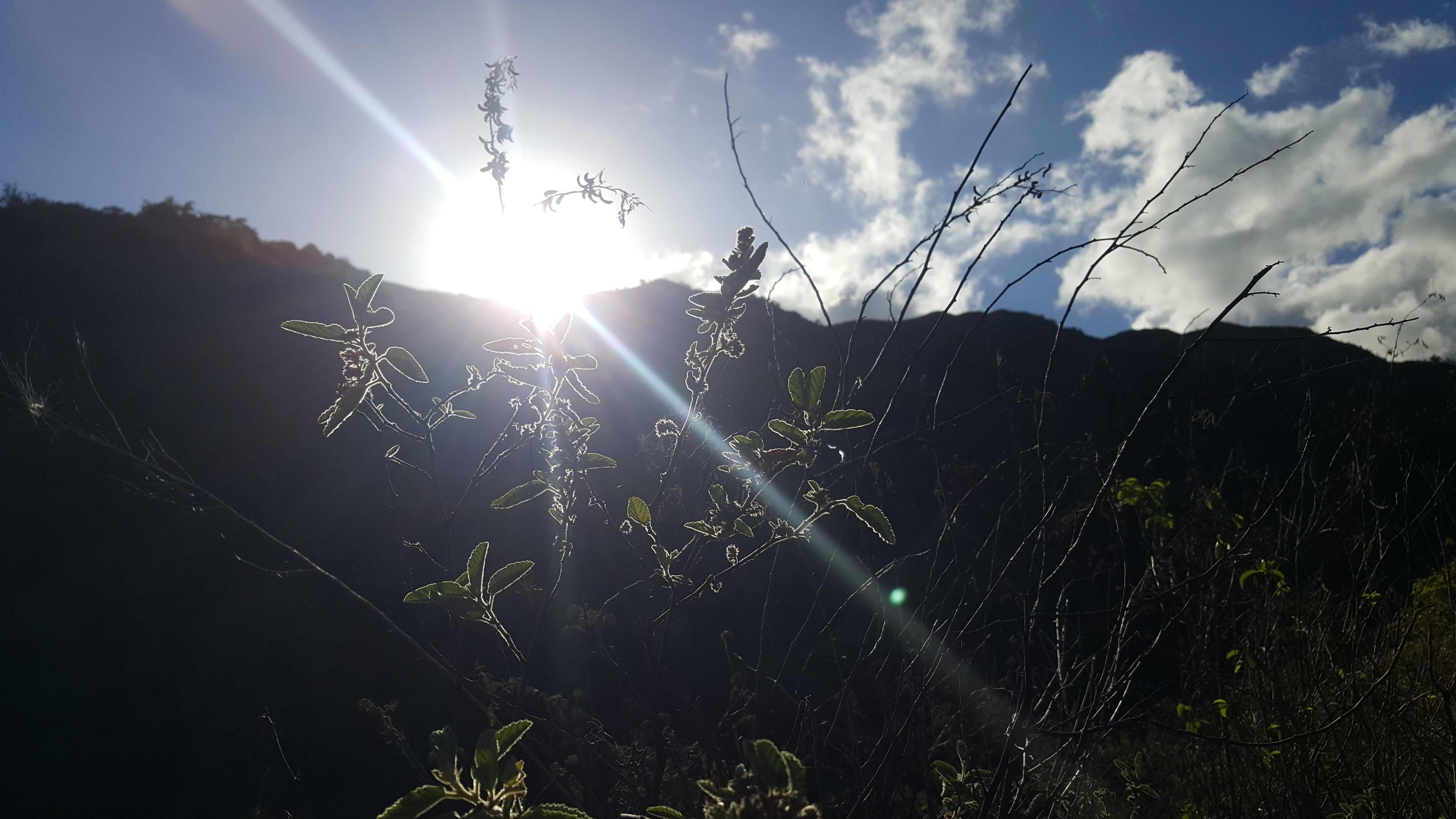 https://tahititourisme.com.au/wp-content/uploads/2020/09/20180519_074342.jpg