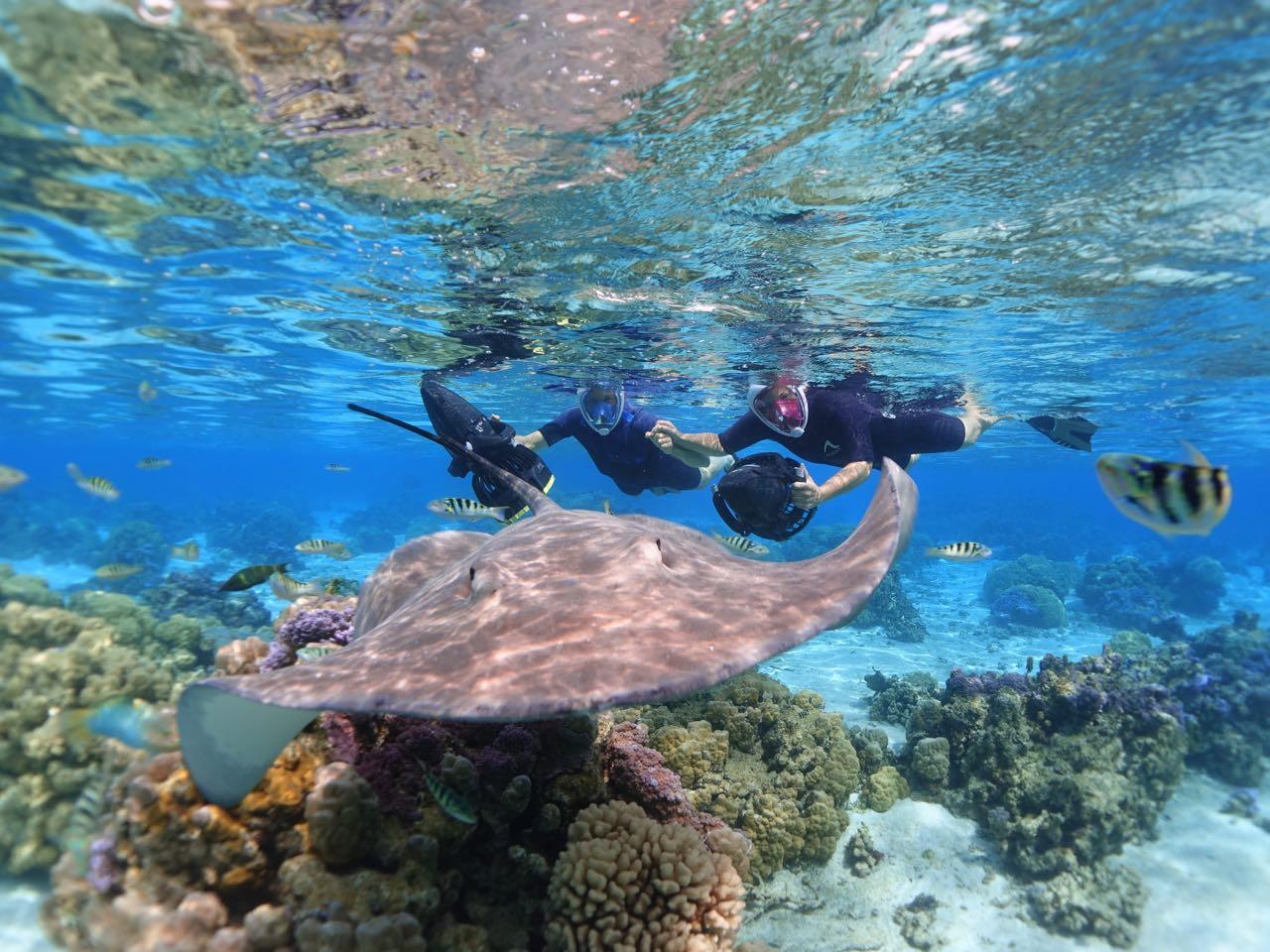 https://tahititourisme.com.au/wp-content/uploads/2020/09/Sea-Scooter-Snorkeling-Tour-à-moorea-copie-2.jpg