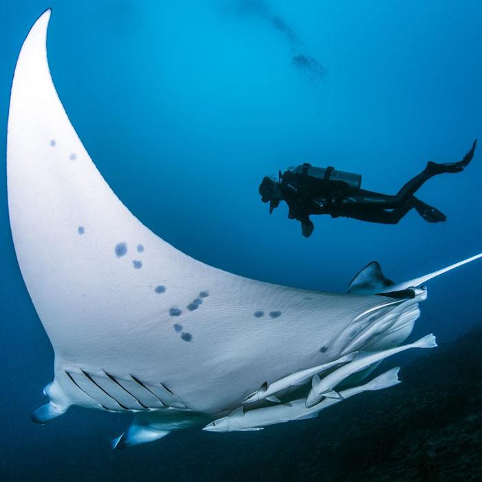 7 Night Bora Bora Dive Adventure – Relaunch Offer
