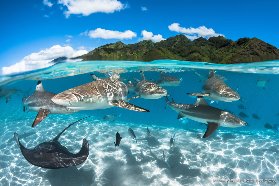 https://tahititourisme.com.au/wp-content/uploads/2021/08/Moorea-Sharks-Ray-Greg-Lecouer-1140.jpg
