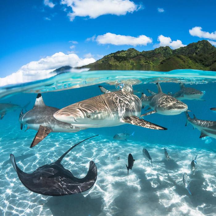 7 Night Moorea Dive Adventure