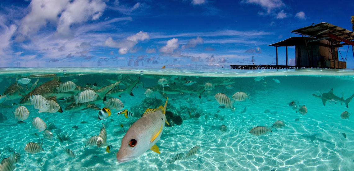 https://tahititourisme.com.au/wp-content/uploads/2021/09/Faka-sud-piscine-Frederique-LeGrand-Top-Dive1140.jpg