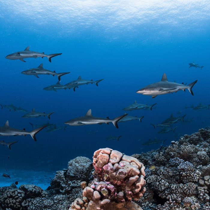 7 Night Fakarava Dive Adventure