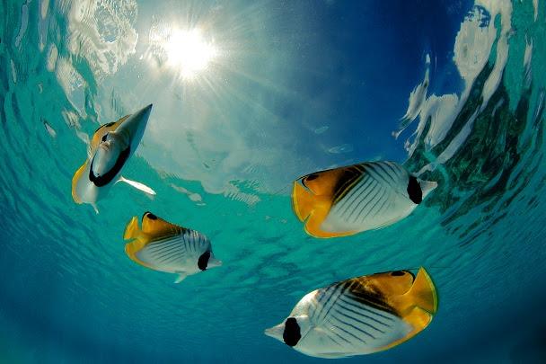 https://tahititourisme.com.au/wp-content/uploads/2021/09/LD_Rangi-lagon-Frederique-LeGrand-Top-Dive.jpg