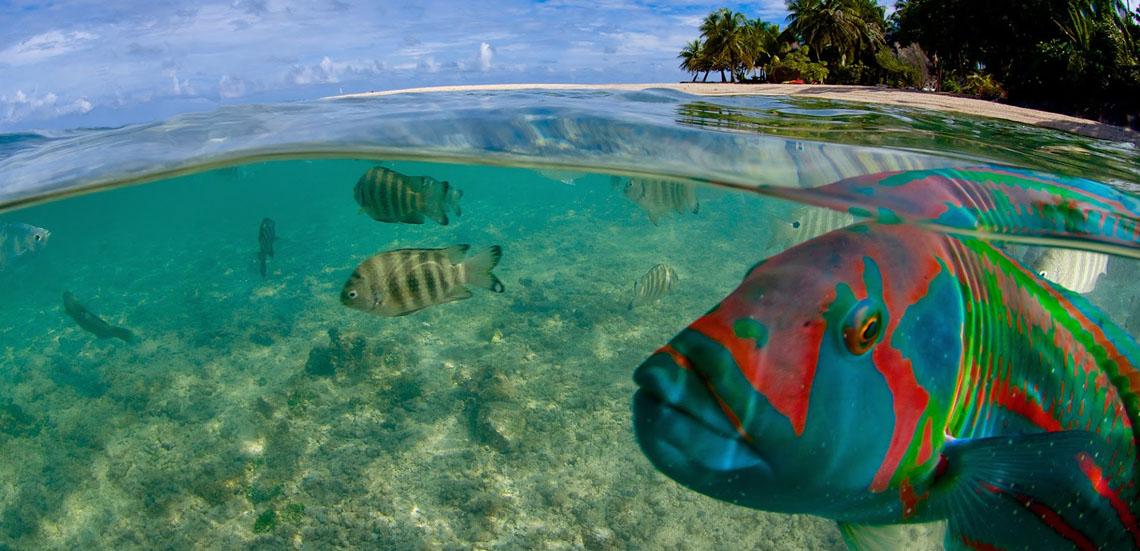 https://tahititourisme.com.au/wp-content/uploads/2021/09/Tikehau-lagon-Frederique-LeGrand-Top-Dive1140.jpg