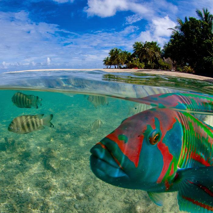 7 Night Tikehau Dive Adventure – 2 Nights Free