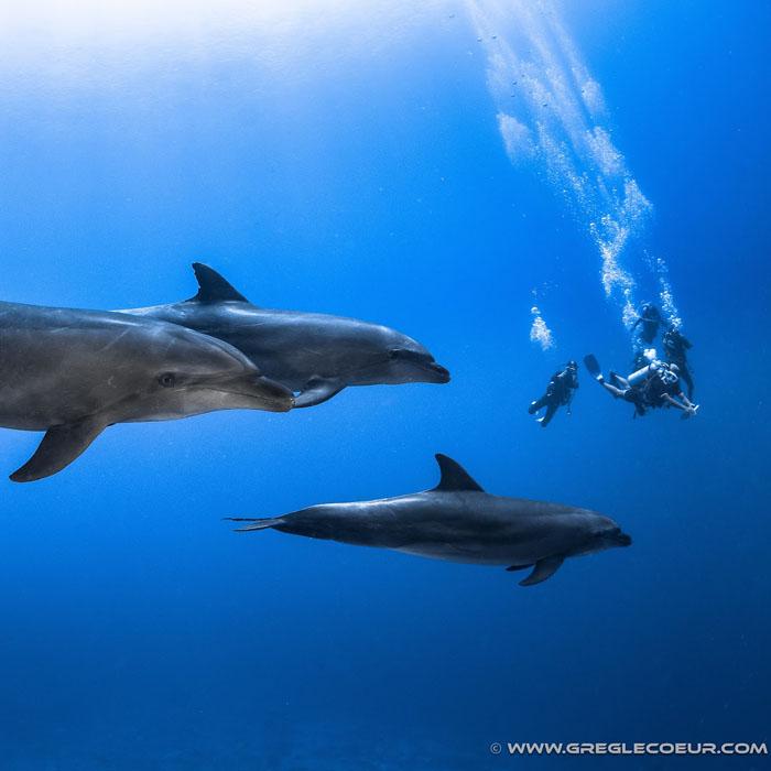 7 Night Rangiroa Dive Adventure – Relaunch Offer